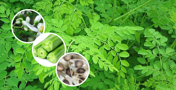 Photo of Health benefits of Moringa
